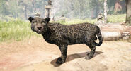 1 jaguar raro negro