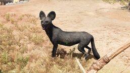 1 perro salvaje negro raro.jpg