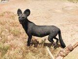 Perro salvaje negro raro