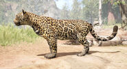 1 jaguar