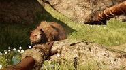 1 oso pardo