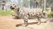 2 leopardo