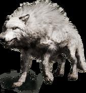 3 lobo blanco