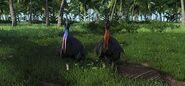 Farcry cassowary
