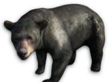 Far Cry 3 animals