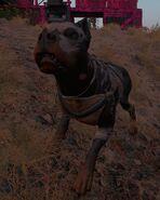 Lv2dog