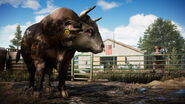 FC5 Screenshot Bull