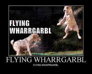 Flying wharrgarbl