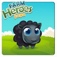 Black sheep introduction