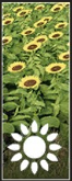 Sunflowers icon.png