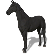 FS19 Animal-HorseBlack