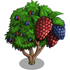 Giant Chinese Mulberry Tree-icon
