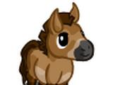 Przewalski Mini Foal