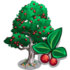 Chinese Hackberry Tree-icon