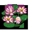 Lotus-icon.png