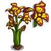 Leopard Orchid Full Bloom-icon.png