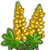 Yellow Lupin-icon