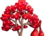 Australian Flame Tree