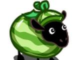Watermelon Sheep