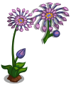 African Daisies Single Bloom-icon.png