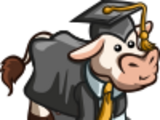 Scholar Cow