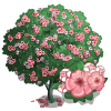 Oleander Tree-icon.png