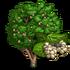 White Mulberry Tree-icon