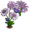 African Daisies Full Bloom-icon.png