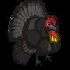 Australian Brush Turkey-icon