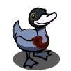 Blue Duck-icon.png