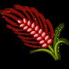 Red Australian Wheat-icon