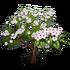 Evergreen Pear Tree-icon