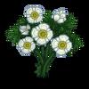 Glacier Buttercup Tree-icon.png