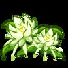 Night Cereus Crop-icon.png