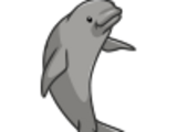 Finless Porpoise