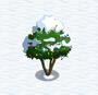 Avocado tree under snow and lights
