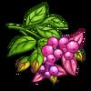 Lillipilli-icon