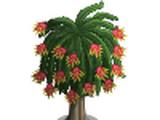 Dragon Fruit Tree