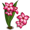 Impala Lily Full Bloom-icon.png
