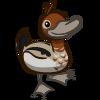 Australian Wood Duck-icon