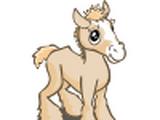 Cream Draft Foal