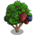 Chinese Mulberry Tree-icon