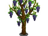 Grape Vine Tree