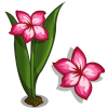Impala Lily Single Bloom-icon.png