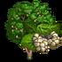 Giant White Mulberry Tree-icon