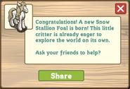 Snow stallion foal