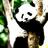 PandaCrazy17's avatar