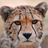 Mousermind's avatar