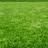 Literally grass's avatar