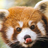 Ccsparkles's avatar